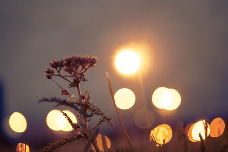 Entrepreneurial Arms - Flower in field with lights